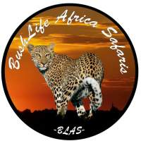 BushLife Africa Safaris