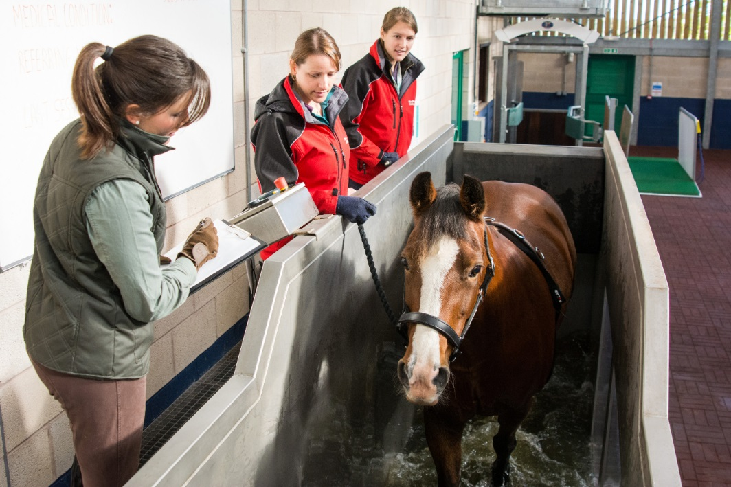 Moulton College instrumental in developing new aqua treadmill guidelines to ensure horse welfare